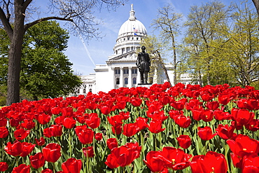 USA, Wisconsin, Madison, State Capitol Building, red tulips in foreground