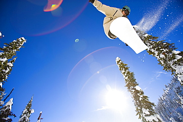 USA, Montana, Whitefish, Young man snowboarding in forest
