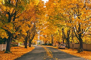 USA, Oregon, Salem, treelined autumn lane