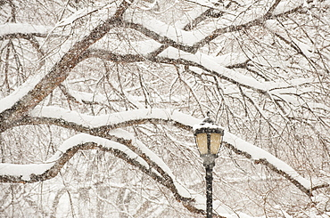 Snow covered tree branches and lamp post