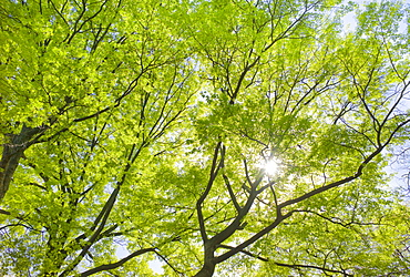 Sunlight shining through tree branches in spring