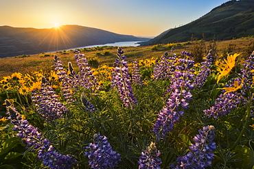 Meadow, The dalles,Columbia Gorge oregon