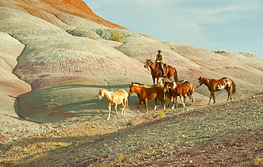 Horseback rider herding wild horses