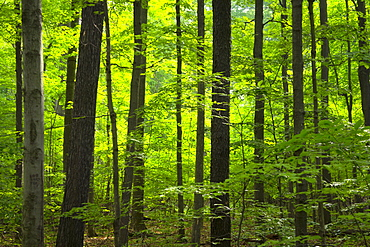 Forest, Lake county Ohio