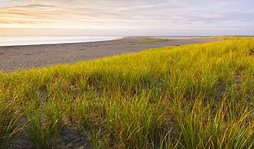 Grass beside beach