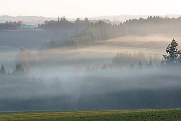 Fog over Wilamette Valley, USA, Oregon, Marion County