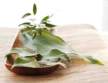 Tropical leaves in wooden bowl