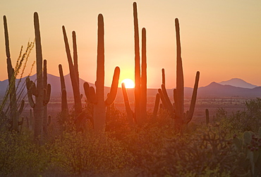 Sun setting over Saguaro National Park, Arizona