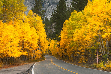 Autumn landscape, Eastern Sierra California