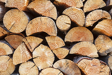 Firewood stacked, Elkton, OR