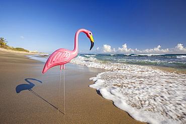 Plastic Flamingo, Isabel Beach, Puerto Rico,