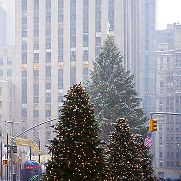 Christmas trees downtown
