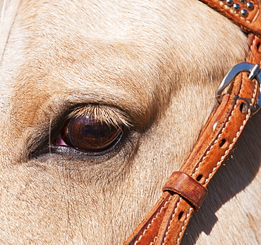 Close-up of horse's eye