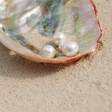 Close up of pearls in oyster shell