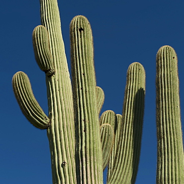 Cactus against blue sky