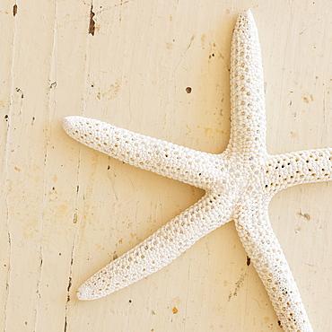 Studio shot of starfish