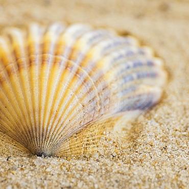 Studio shot of seashell