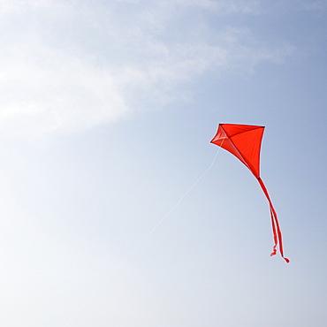 Kite flying in air