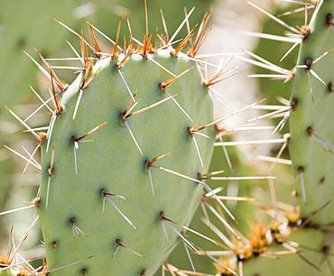 Close up of cactus, Arizona, United States