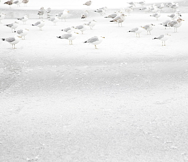 USA, New York State, Rockaway Beach, seagull on beach in winter