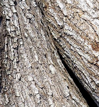 trees/ bark
