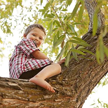 Little boy (2-3) sitting in tree, Lehi, Utah