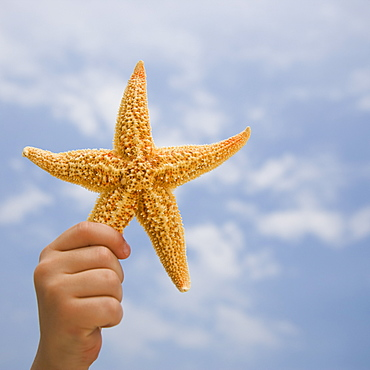 Child's hand holding starfish