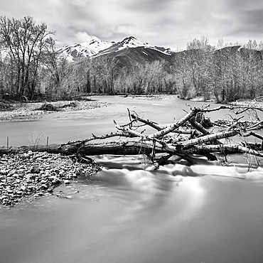 Bare branches in river in Bellevue, Idaho, USA