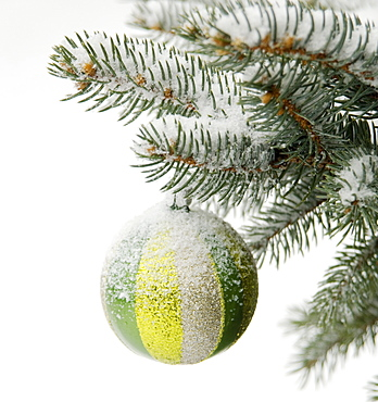 One Christmas ornament hanging in tree