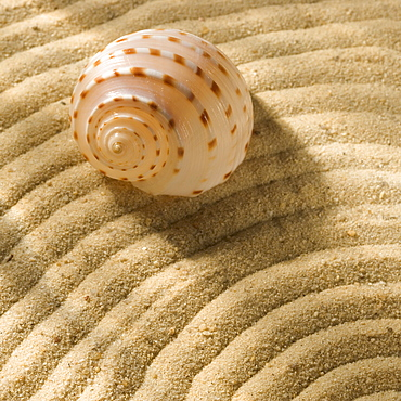 Still life of seashell and sand