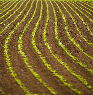 France, Rocroi, Field with growing vegetables, France, Rocroi