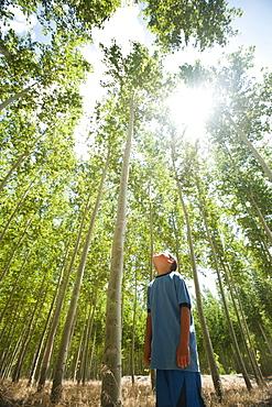 USA, Oregon, Boardman, Boy (8-9) looking up at poplar trees