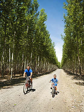Father with son (8-9) cycling on country road