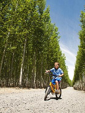 Boy (8-9) riding bike between poplar trees in tree farm