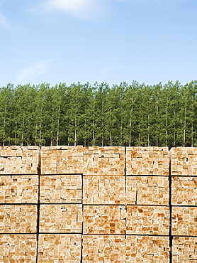 Orderly stack of timber in tree farm
