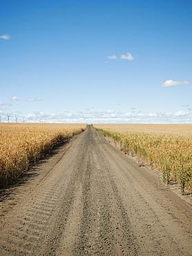 USA, Oregon, Wasco, Dirt road between wheat fields