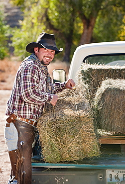 Cowboy lifting bales of hay
