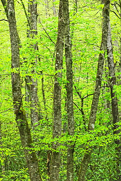A forest of trees