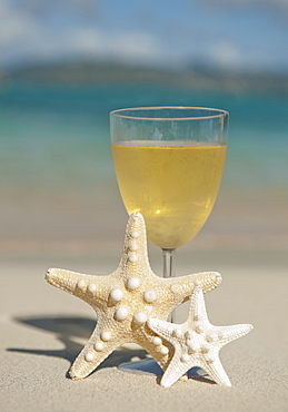Glass of wine and sea stars