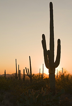 Sun behind cactus, Saguaro National Park, Arizona