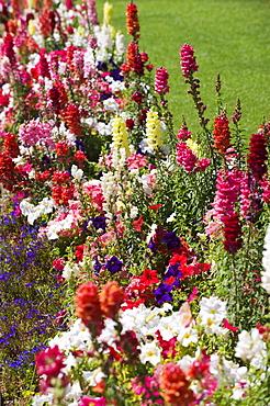 Assorted flowers in garden