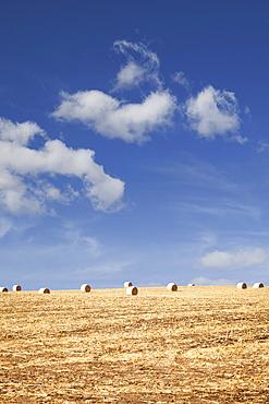 USA, Iowa, Latimer, Hay bales on field