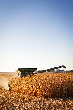 USA, Iowa, Latimer, Combine harvester harvesting corn