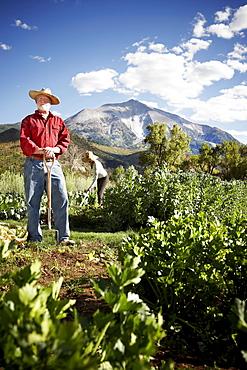 USA, Colorado, Aspen, farmers working in field