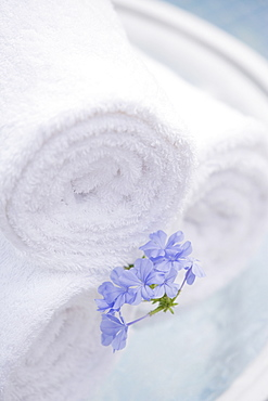 Spa towels and tropical flower