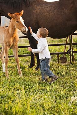 USA, Utah, Lehi, Boy (2-3) stroking foal