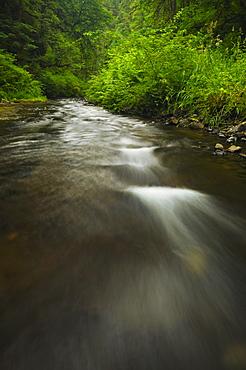 USA, Oregon, Silver Falls State Park, Silver Creek