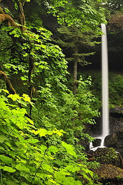 USA, Oregon, Silver Falls State Park, North Falls
