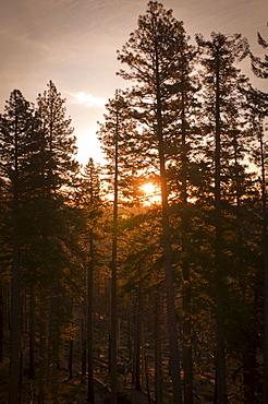 USA, Oregon, Forest at sunrise