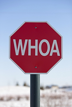 Stop sign with the word WHOA on it